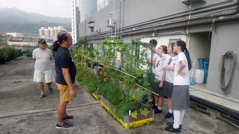 《衣食住行點點綠•都市發展可持續》訪問相片集︰荃灣「都市農莊」